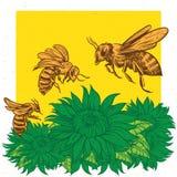 Винтажная ретро иллюстрация вектора летать пчел Стоковые Изображения RF