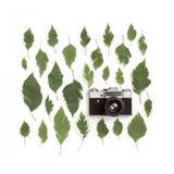 Винтажная ретро камера фото и картина листьев зеленого цвета на белизне Стоковая Фотография RF