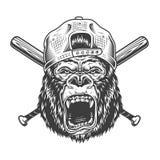 Винтажная сердитая голова гориллы в крышке иллюстрация вектора