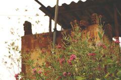 Винтажная старая хорошо с розовыми полевыми цветками - ржавой текстурой стены Стоковое Изображение RF