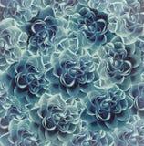 Винтажная флористическая бирюз-голубая красивая предпосылка тюльпаны цветка повилики состава предпосылки белые Букет цветков от р Стоковое фото RF