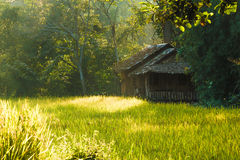 Винтажная хата в поле риса, Chiangmai, Таиланде стоковая фотография rf
