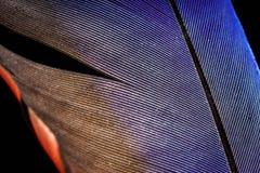 Винтажная чернильница с гусын-quill внутрь Стоковые Изображения