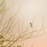 Винтажное дерево весны с птицей Стоковое Изображение