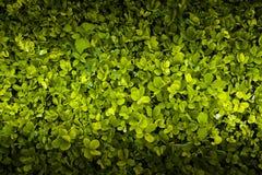 Винтажное зеленое название предпосылки листвы Стоковая Фотография RF