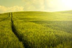 Винтажное поле ячменя Стоковые Изображения