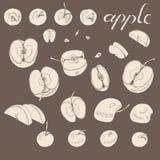 Винтажное собрание всех и отрезанных яблок Эскиз sepia руки вычерченный с яблоками на коричневой предпосылке иллюстрация вектора
