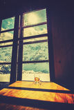 Винтажное стилизованное пустое стекло чая на деревянном столе Стоковое Изображение RF