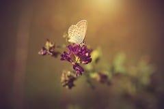 Винтажное фото бабочки на заходе солнца Стоковое Изображение RF