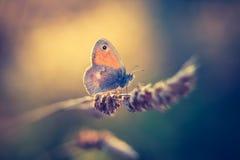 Винтажное фото бабочки стоковые фото