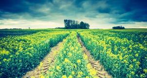 Винтажное фото зацветая поля рапса на восходе солнца Стоковые Изображения RF