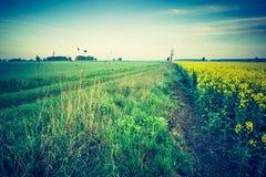 Винтажное фото зацветая поля рапса на восходе солнца Стоковые Изображения