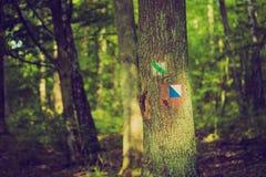 Винтажное фото знака следа покрашенное на коре дерева в лесе летнего времени Стоковые Фотографии RF