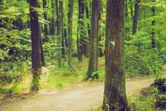 Винтажное фото знака следа покрашенное на коре дерева в лесе летнего времени Стоковая Фотография RF