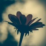 Винтажное фото красного цветка Стоковое Изображение