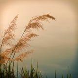 Винтажное фото крупного плана цветка тросточки Стоковое Фото