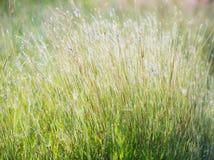 Винтажное фото травы цветков Стоковое Изображение