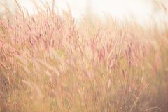 Винтажное фото травы цветков Стоковое Фото