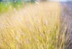 Винтажное фото травы цветков Стоковые Изображения RF