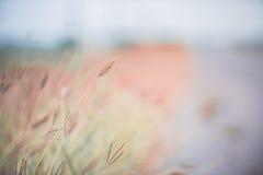 Винтажное фото травы цветков Стоковое Изображение RF
