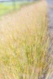 Винтажное фото травы цветков Стоковая Фотография RF