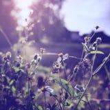 Винтажное фото цветка Стоковые Фотографии RF