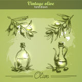 Винтажной комплект нарисованный рукой дерева и бутылки оливковой ветки Иллюстрация штока