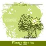 Винтажной оливковое дерево и оливковая ветка нарисованные рукой Бесплатная Иллюстрация
