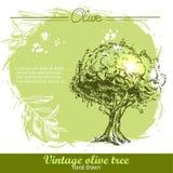 Винтажной оливковое дерево и оливковая ветка нарисованные рукой Стоковое фото RF