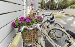 Винтажные велосипеды Стоковые Фото