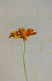 Винтажные желтые цветки на старой бумаге Стоковые Изображения RF