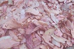 Винтажные лист Стоковые Изображения