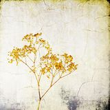 Винтажные красные одичалые травы на треснутой предпосылке Стоковые Изображения RF