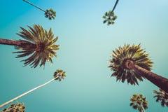 Винтажные пальмы Беверли-Хиллз Лос-Анджелеса Стоковые Фото