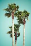 Винтажные пальмы на тропическом побережье Стоковая Фотография