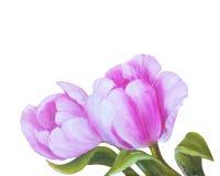 Винтажные розовые тюльпаны Стоковая Фотография