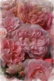 Винтажные розы стоковая фотография rf