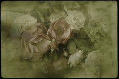 Винтажные розы стоковое фото rf