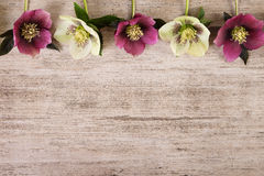 Винтажные цветки весны рамки морозника на русой деревенской предпосылке Стоковая Фотография RF