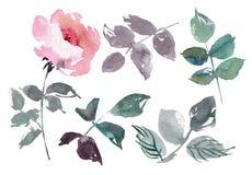 Винтажные цветки установили предпосылку overwhite Свадьба цветет пачка Собрание цветка акварели детализировало нарисованную руку стоковые изображения