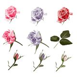 Винтажные цветки установленные на белую предпосылку Свадьба цветет пачка бесплатная иллюстрация