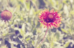 Винтажные цветки Стоковая Фотография