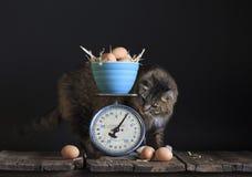 Винтажные яичка и кот масштаба Стоковые Фотографии RF