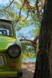 Винтажный автомобиль под вечнозеленым деревом стоковые фотографии rf