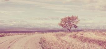 Винтажный ландшафт осени Стоковое фото RF