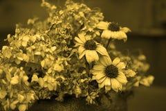 Винтажный букет высушенных цветков Стоковое Изображение