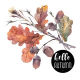 Винтажный букет хворостин, листьев желтого дуба и жолудей иллюстрация вектора