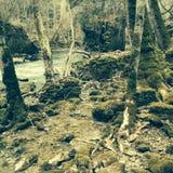 Винтажный лес Стоковое Фото