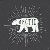 Винтажный ледовитый белый медведь с лозунгом Стоковые Изображения
