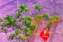 Винтажный зеленый пастельный цвет изолята дерева к творческой картине Стоковые Фотографии RF